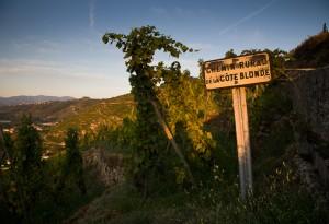 Domaine Guigal - Vigne Le Clos