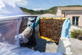Les ruches du Domaine E. Guigal
