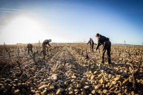 Nalys / Domaine E. Guigal -Travail de la vigne en hiver